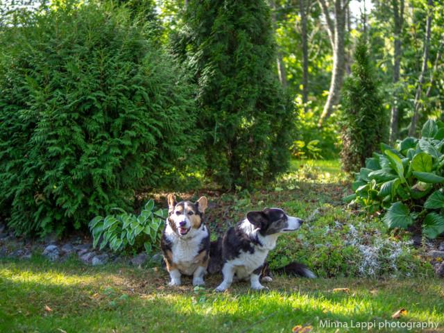 Puutarhassa.jpg