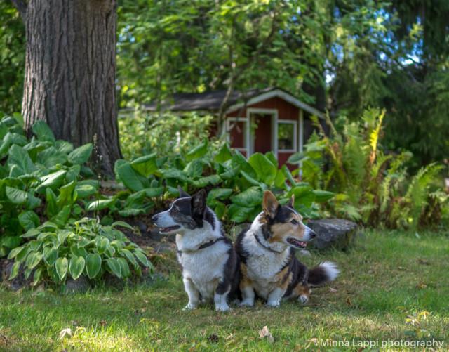 Puutarhassa-8.jpg