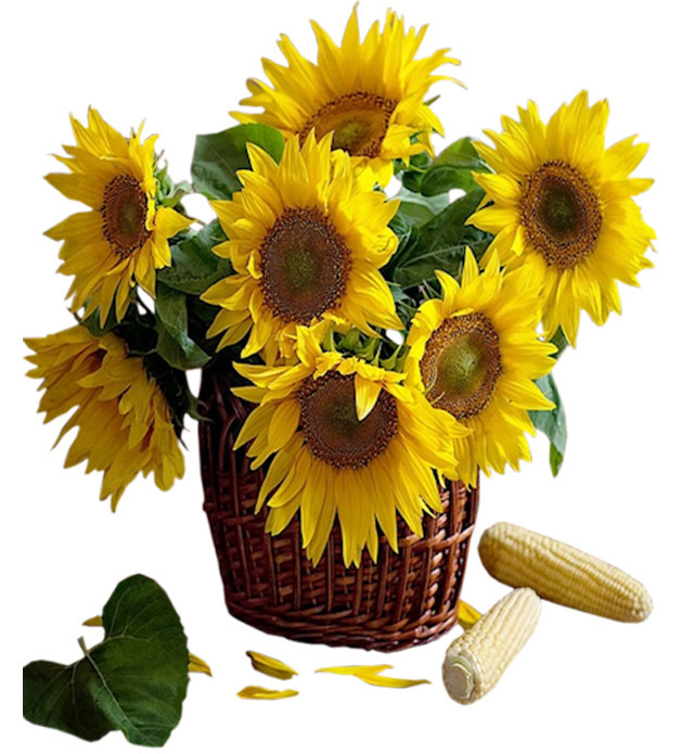 Sunflowers_in_Basket_Clipart.jpg