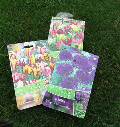 kukkasipulit.jpg