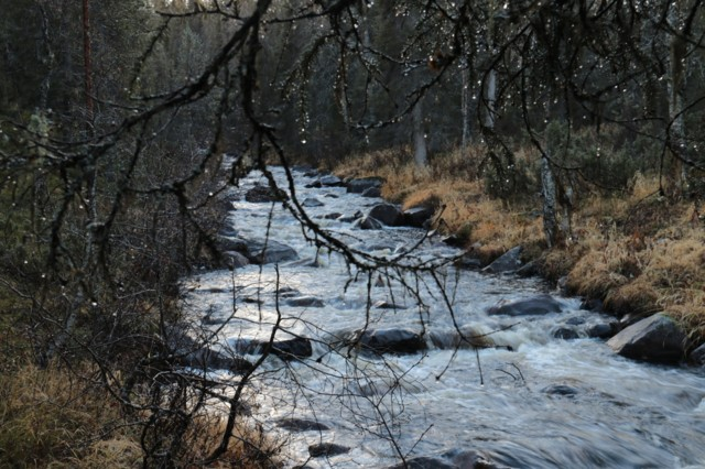 Salmijoki.jpg