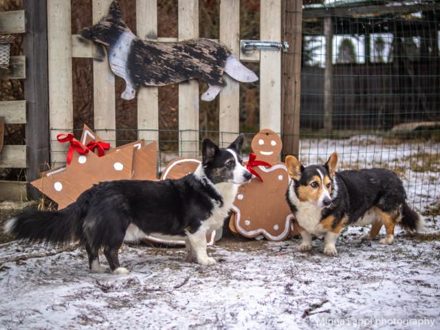 Jouluvalmisteluja-2.jpg