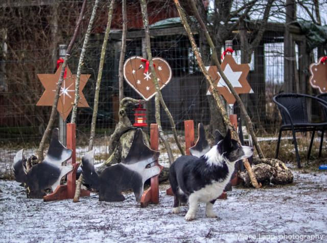 Jouluvalmisteluja-9.jpg