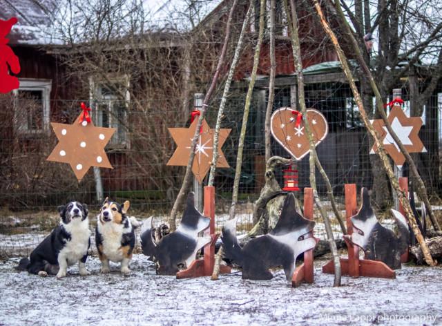 Jouluvalmisteluja-10.jpg