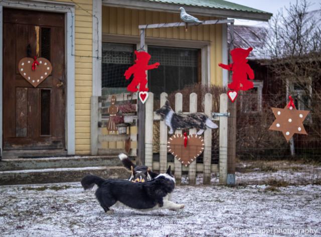 Jouluvalmisteluja-12.jpg