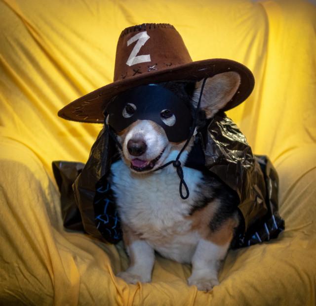 16.Zorro.jpg