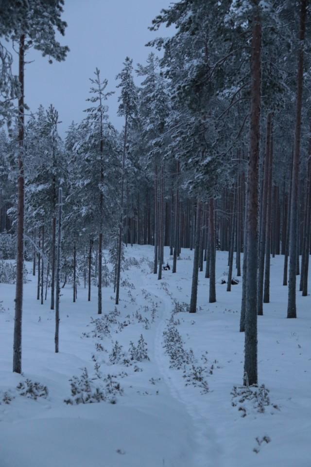 Luminen%20polku.jpg