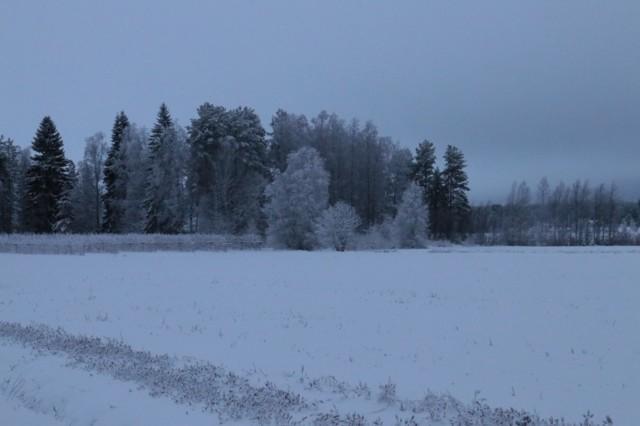Talvinen%20maisema.jpg