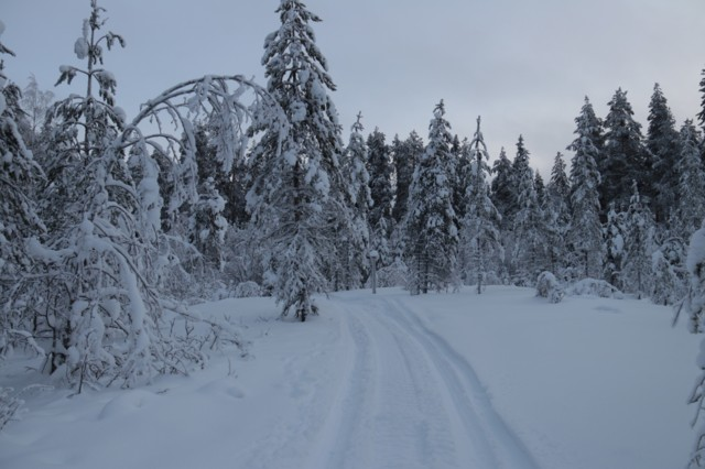 Talvi1.jpg