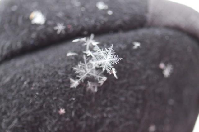 Lumihiutaleita%20kintaalla.jpg