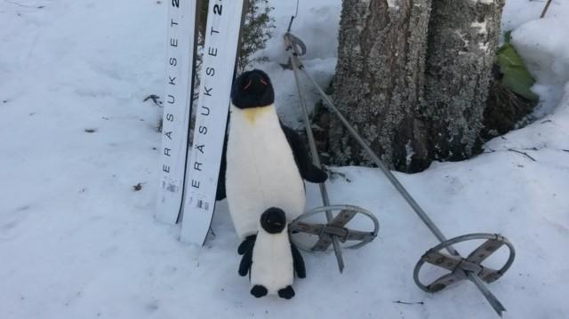Pingviinit.jpg