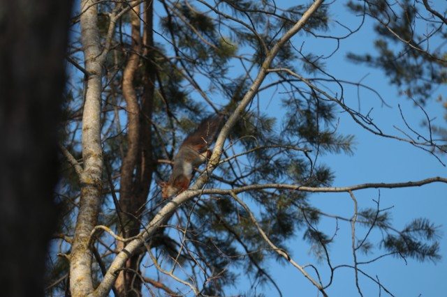 Orava%20160419.jpg