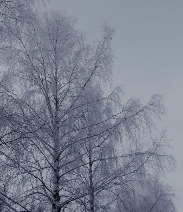 lumihuurrepuu1.jpg