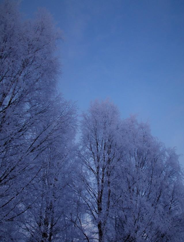 lumihuurrepuu2.jpg
