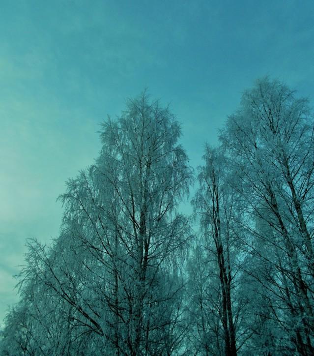 lumihuurrepuu3.jpg