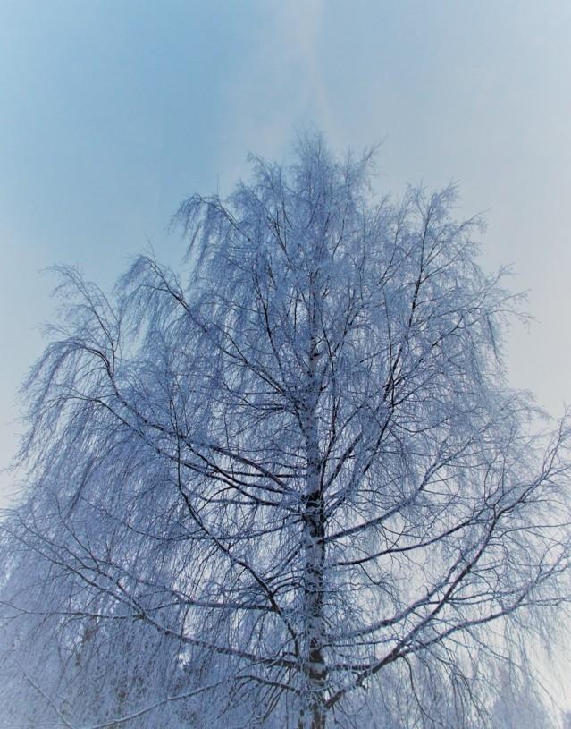 lumihuurrepuu4.jpg