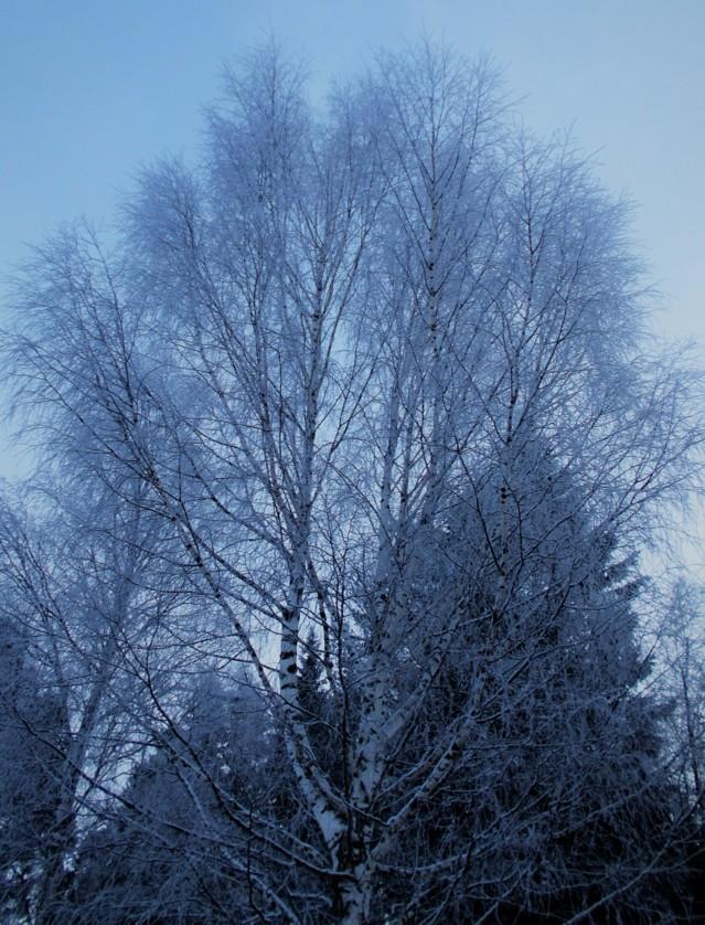 lumihuurrepuu5.jpg