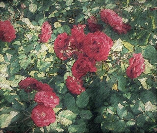 ruusutpiirrustus.jpg