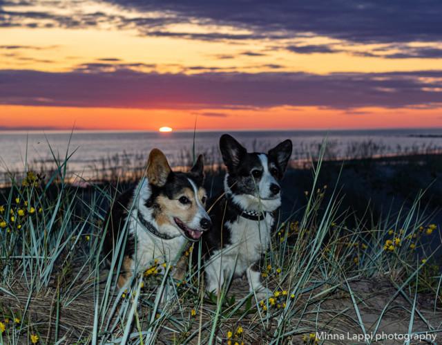 Auringonlasku-4.jpg