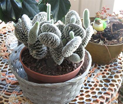 kaktus.jpg