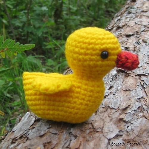 duck2621.jpg