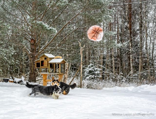 Lumipalloa-6.jpg