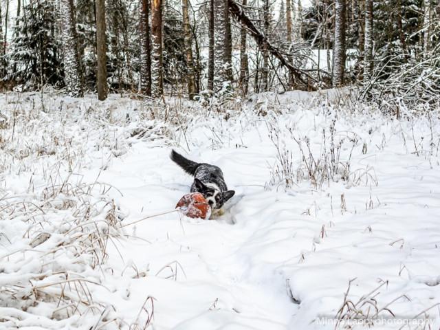 Lumipalloa-8.jpg