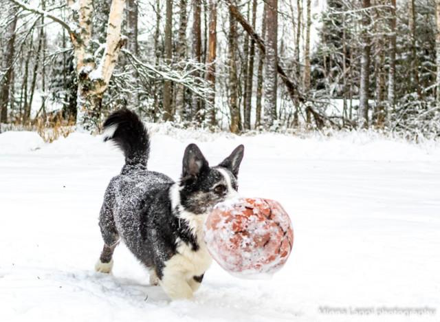Lumipalloa-12.jpg
