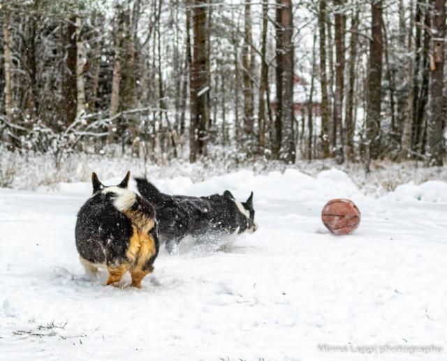 Lumipalloa-13.jpg