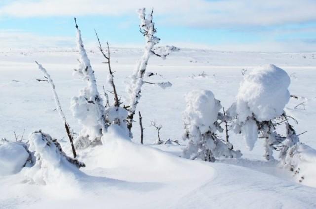vinter2.jpg?1594361234