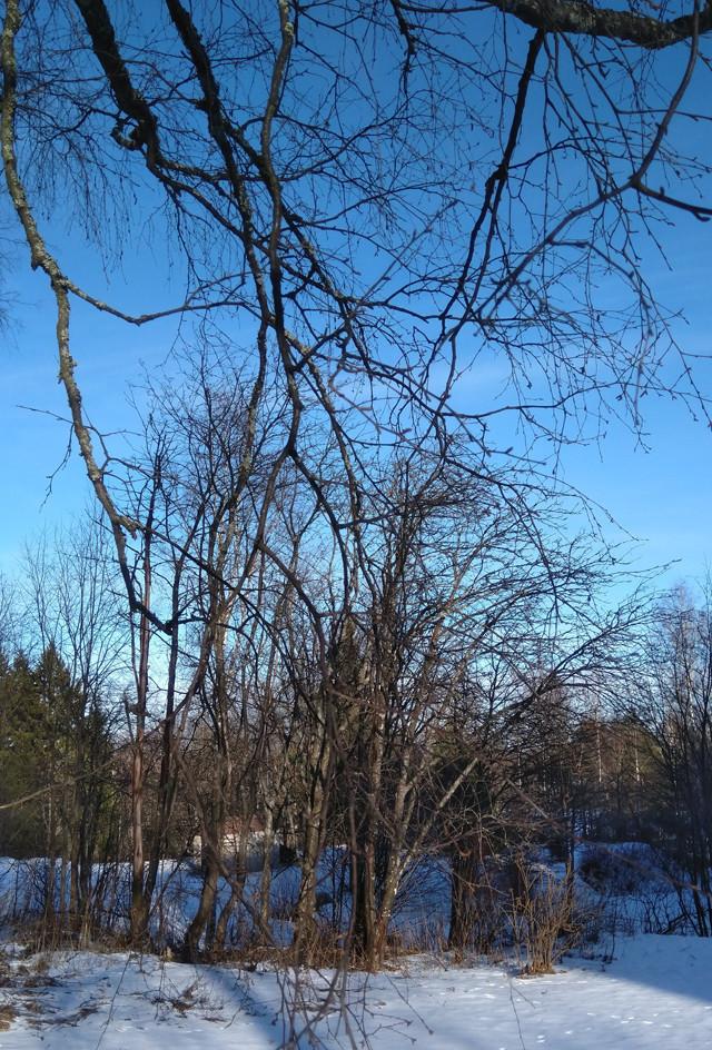 talvi2.jpg