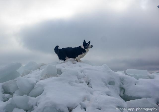 Lumivuorila%20taas-7.jpg