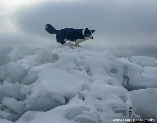 Lumivuorila%20taas-8.jpg