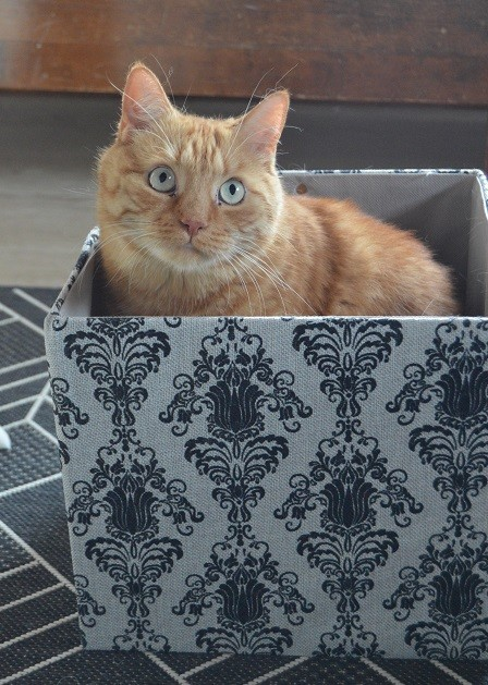laatikko6.jpg