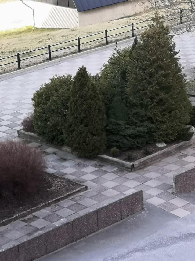 buske2.jpg?1585012738