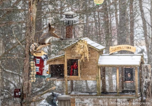Ikkunaseurantaa-2.jpg