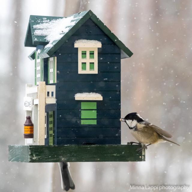 Ikkunaseurantaa-14.jpg