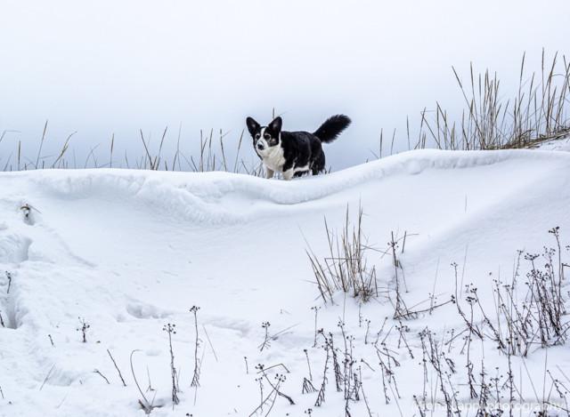 Lumivuorillakin-8.jpg