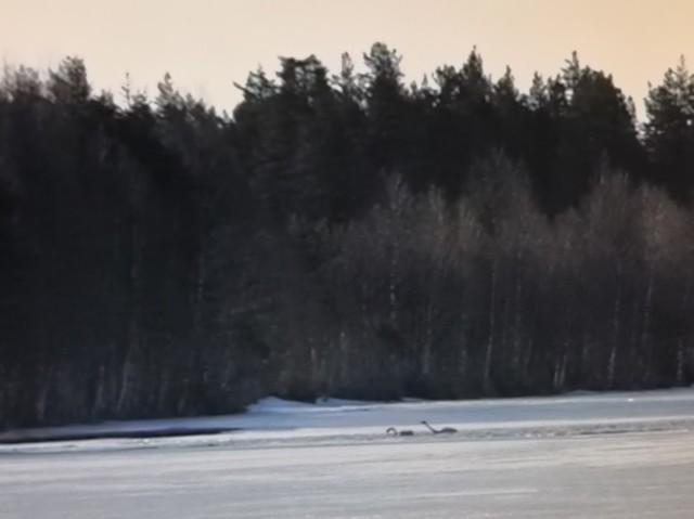 skog.jpg?1586665863
