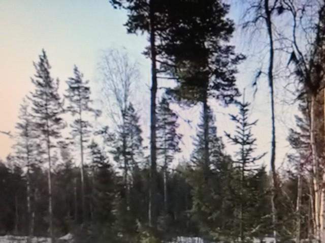 skog2.jpg?1594031522