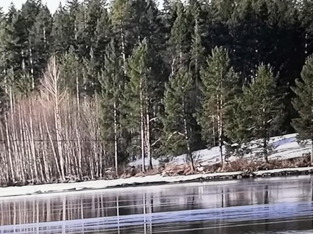 skogen.jpg?1587444834