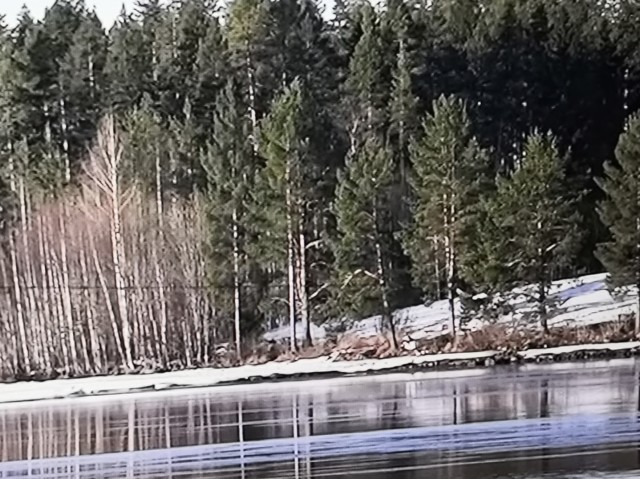 skogen.jpg?1594031585