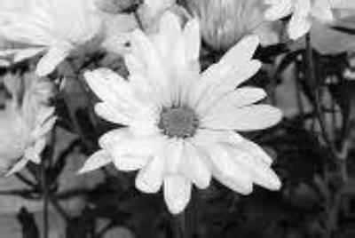 6.vit.blomma.jpg?1589069632