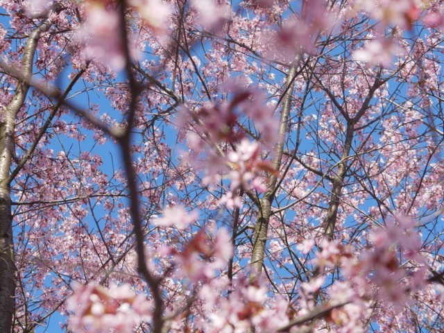 kirsikat.jpg