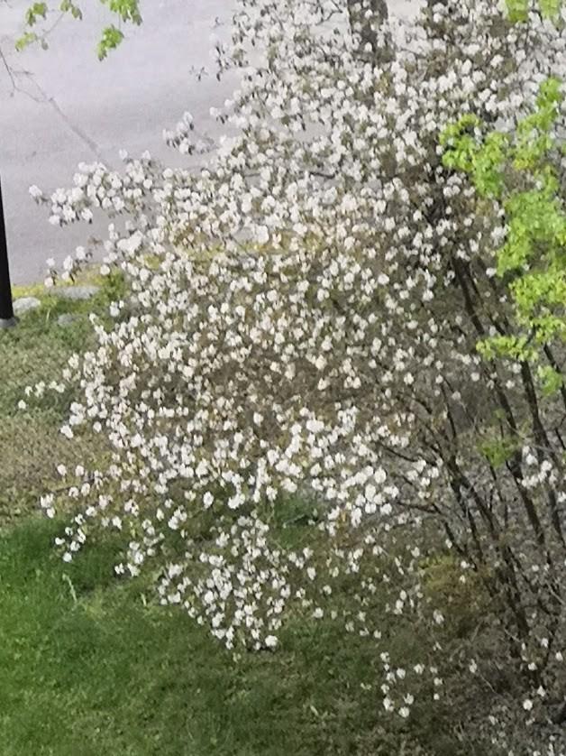 blommande.buske.jpg?1598224833