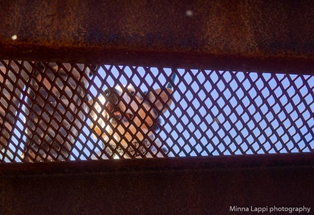 Lintutornilla-4.jpg