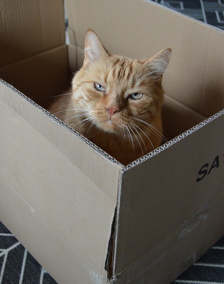 laatikko5.jpg