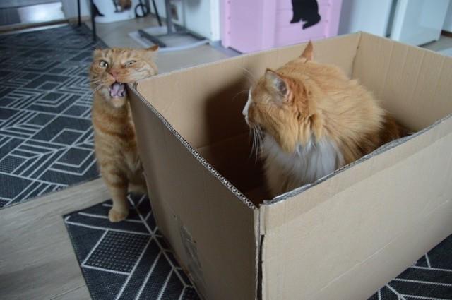 laatikko14.jpg