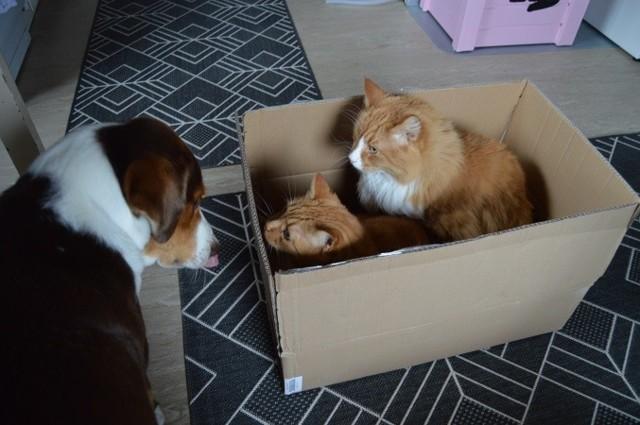 laatikko15.jpg