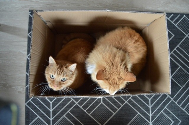 laatikko16.jpg